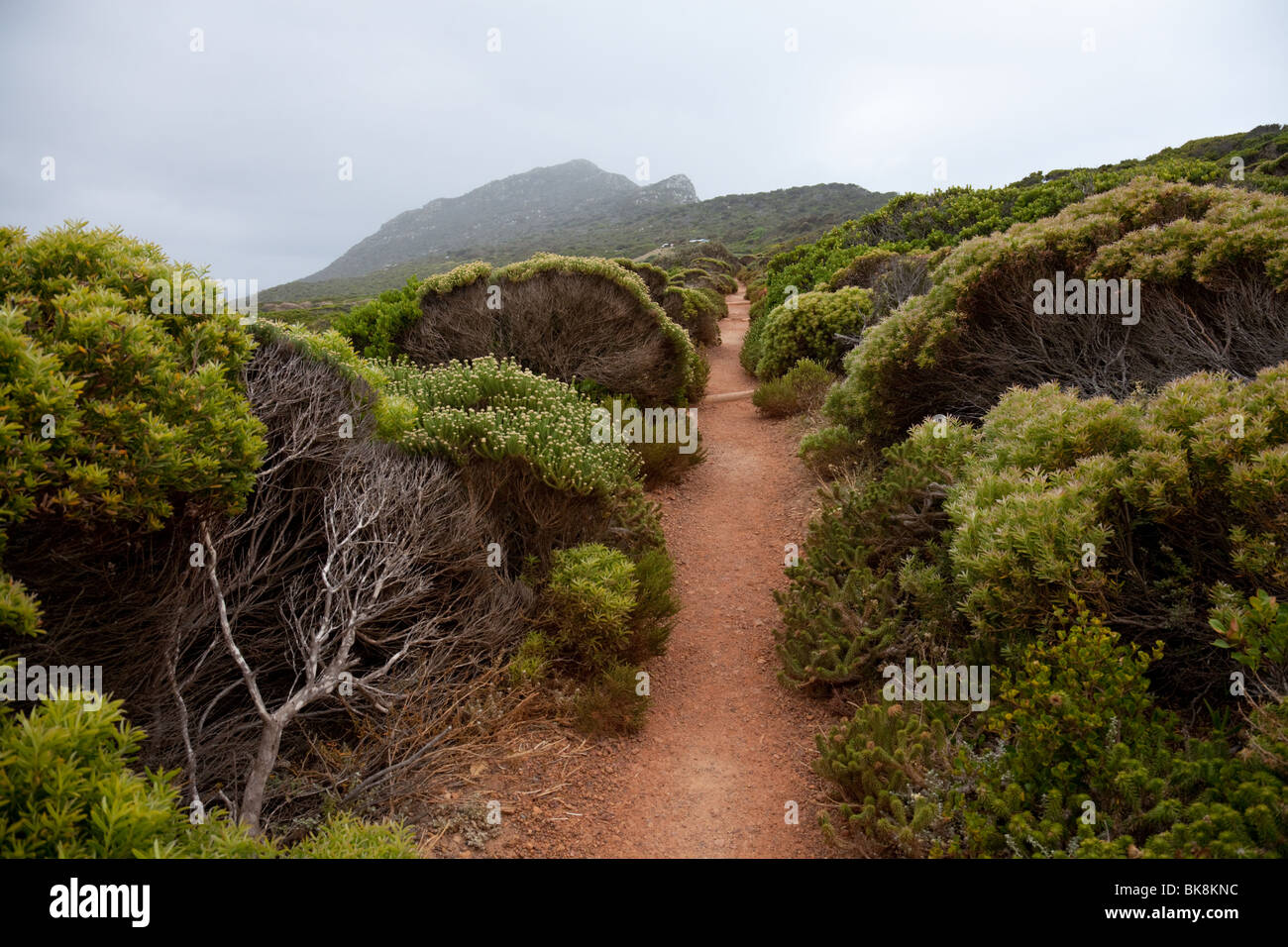 Pathway with bushland at Cape of Good Hope, South Africa - Stock Image