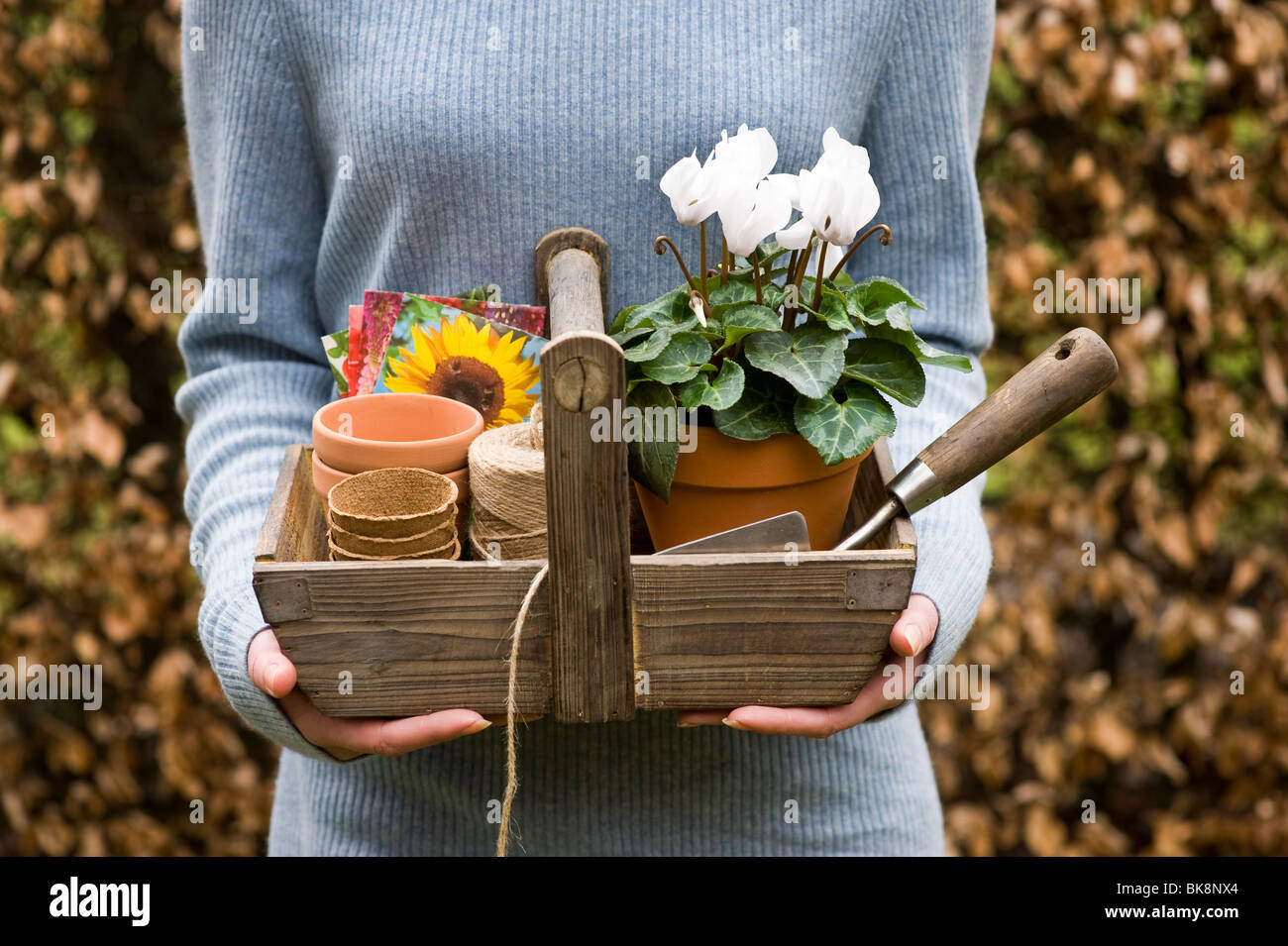 small wooden trug containing stainless steel trowel, string, peat pots, terracotta pots, seed packets and cyclamen - Stock Image