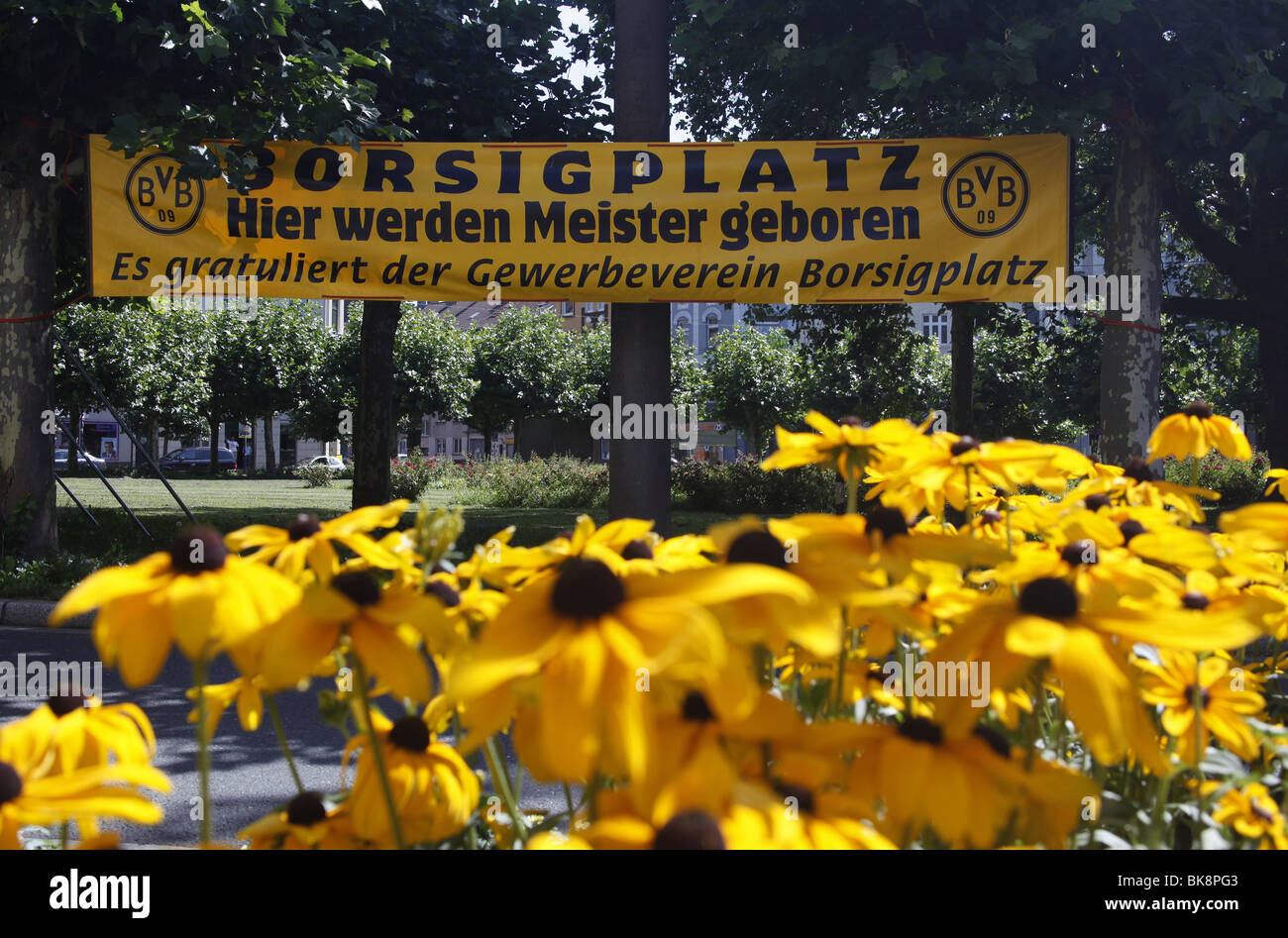 Borsigplatz square with black-yellow flowers and banners to mark the 100th anniversary of the football club Borussia - Stock Image