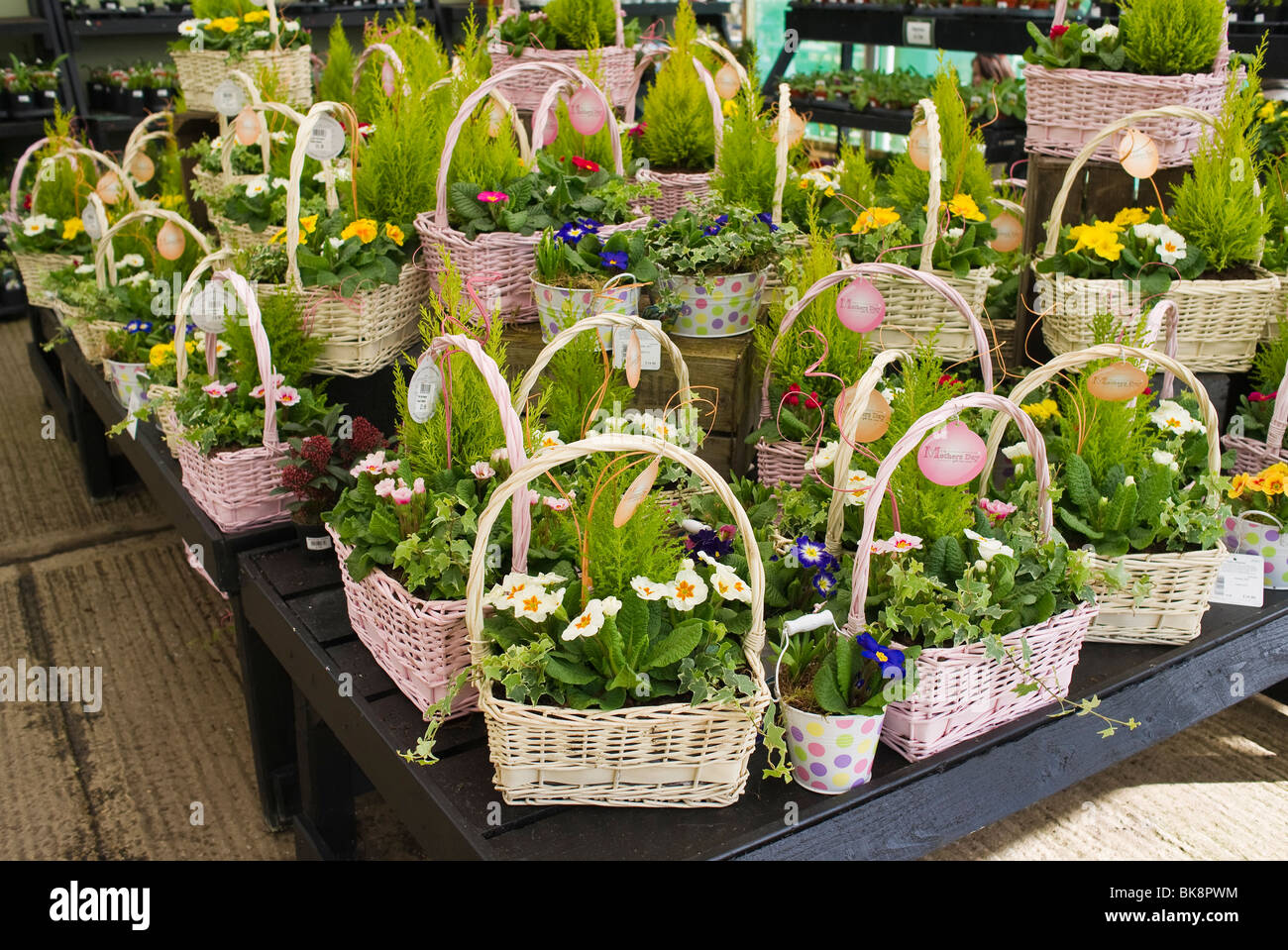 Baskets Of Spring Flowers For Sale On Mothers Day In A Garden Centre