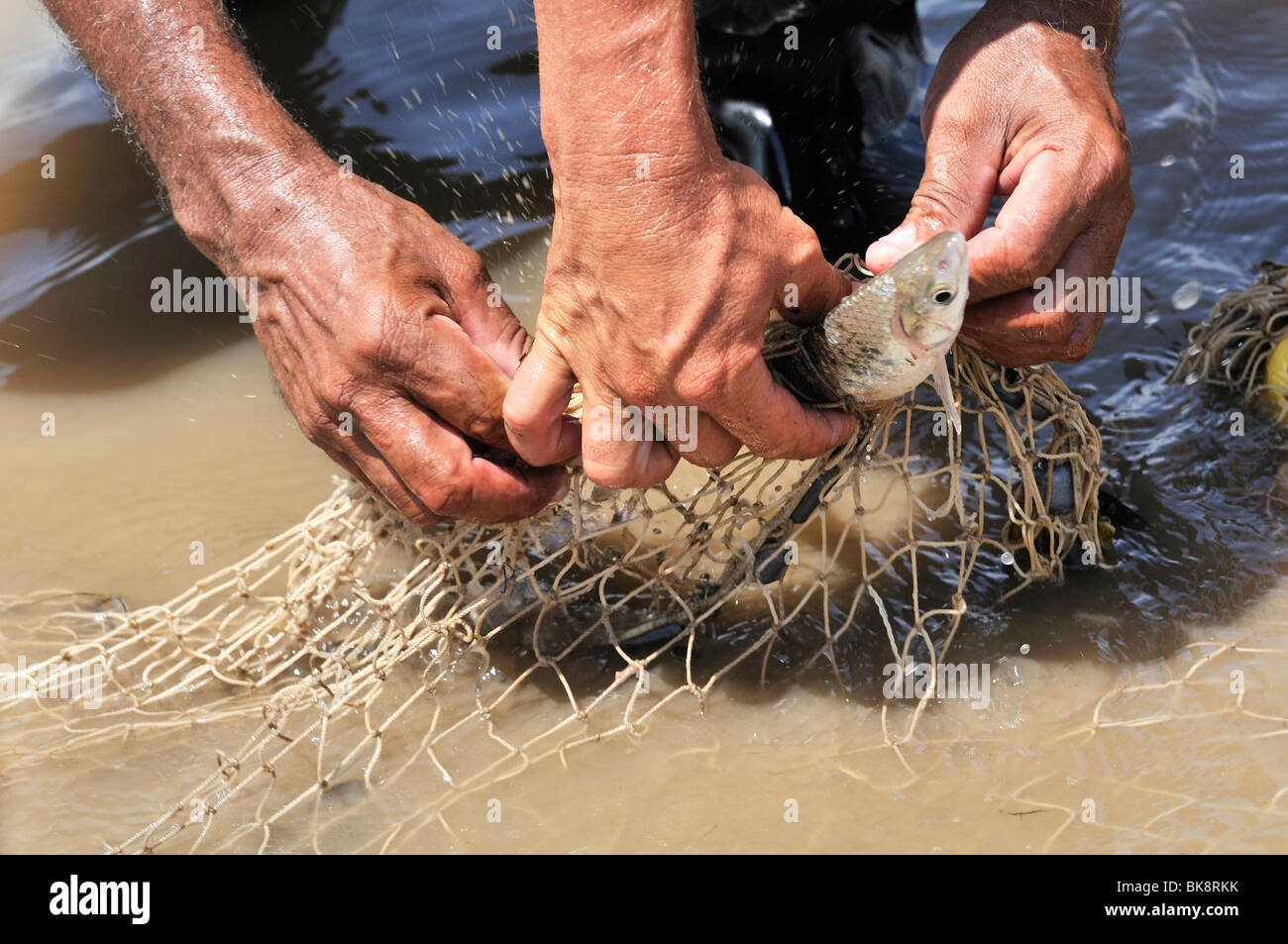 Fishermen taking a struggling fish out of a net, Rio Magdalena River, La Dorada, Caldas, Colombia, South America - Stock Image