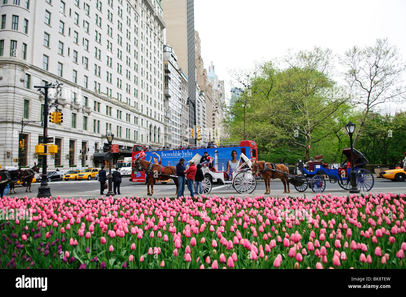 NEW YORK, NY - Tulips and carriages in New York's Central Park in the spring. Stock Photo