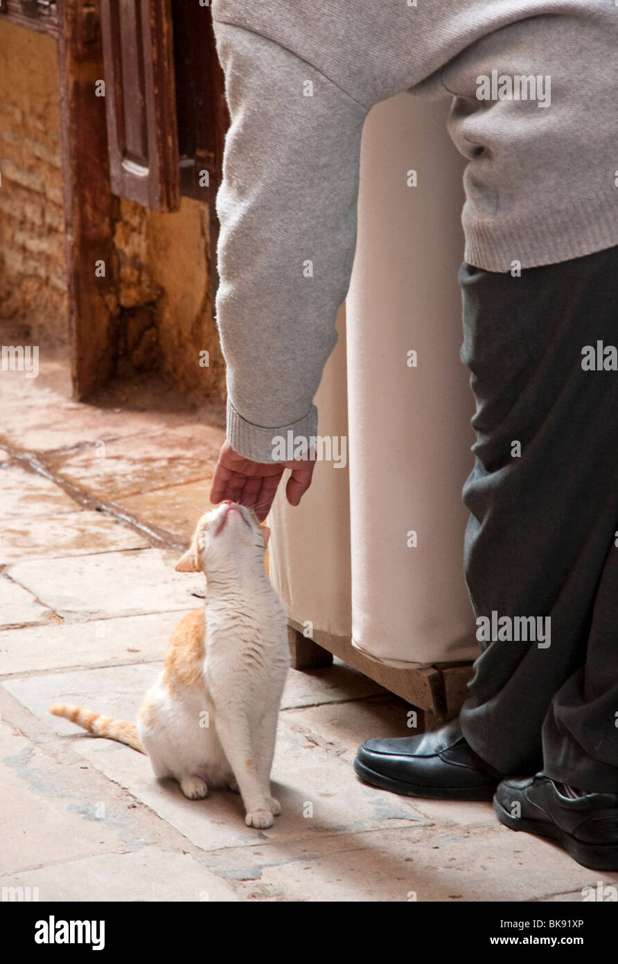 Shopkeeper petting a cat in Fes, Morocco - Stock Image