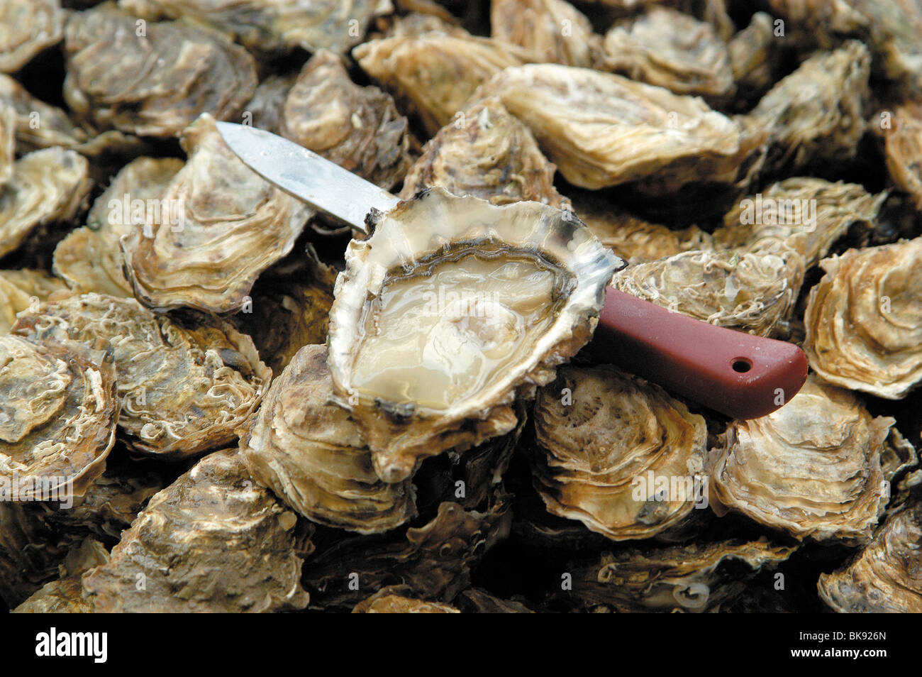Fresh oyster - Stock Image