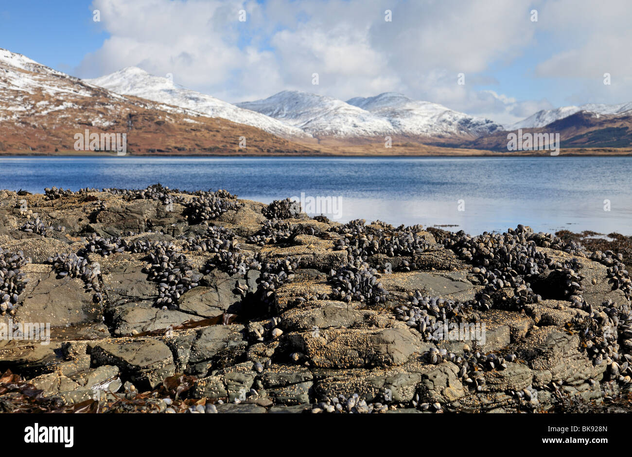 Beautiful Spring day by Loch Beg, with views to Ben More, Isle of Mull, Scotland - Stock Image
