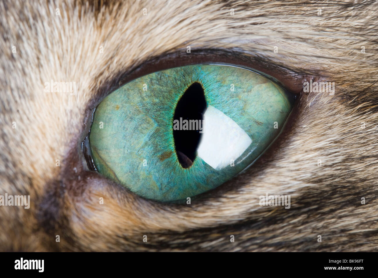 Cat Eye Macro. A close up of a cat's eye showing the vertical pupil and beautiful green iris. - Stock Image