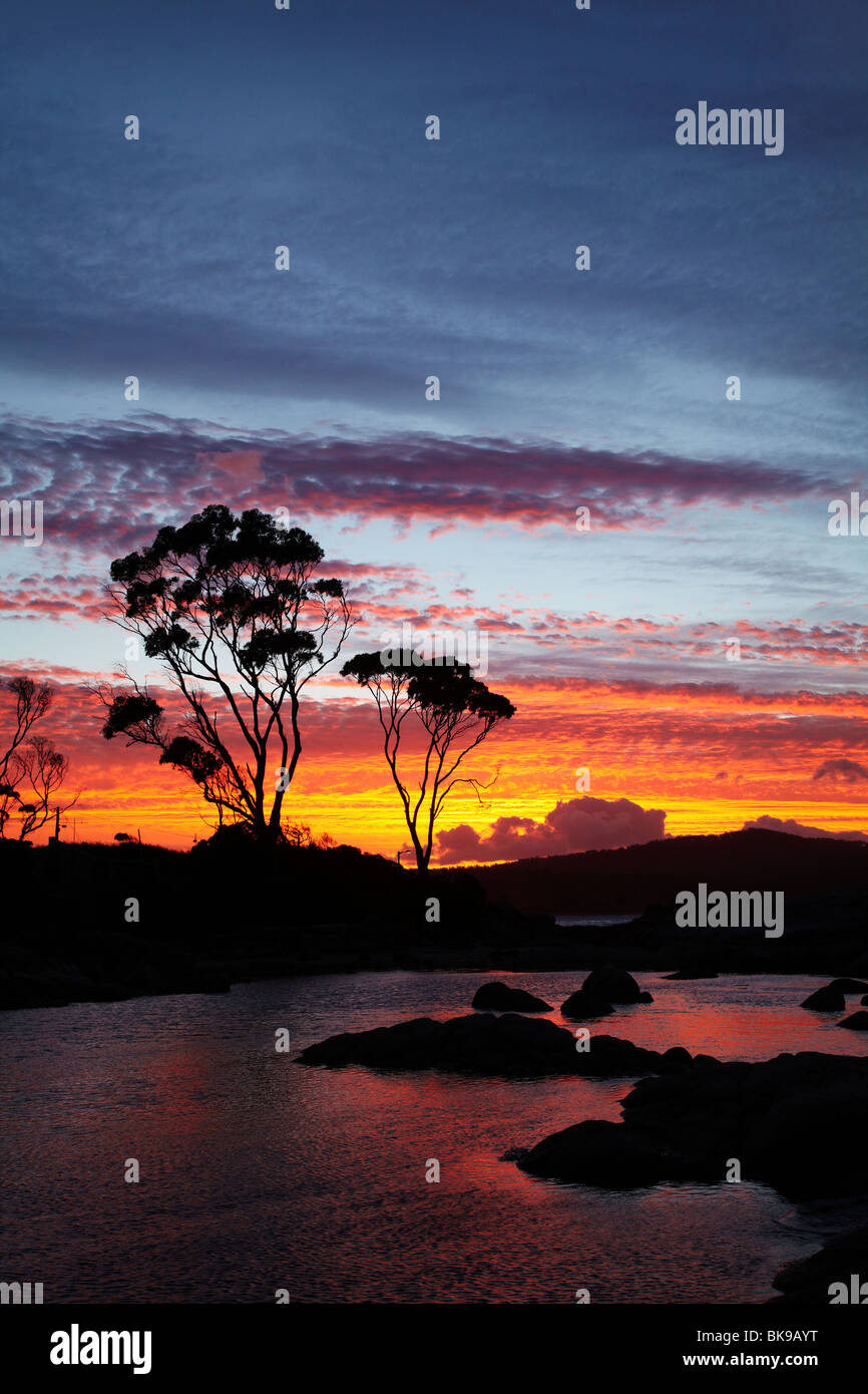 Sunset and Gum Tree, Binalong Bay, Bay of Fires, Eastern Tasmania, Australia - Stock Image