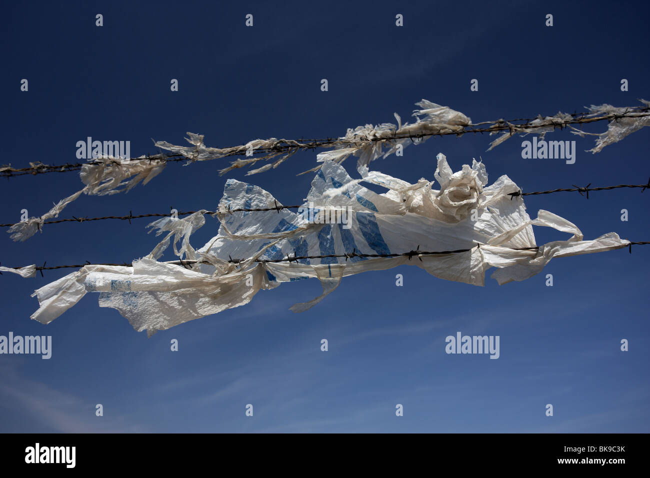 old discarded plastic carrier bag rotting and torn blowing in the wind caught by barbed wire fence - Stock Image