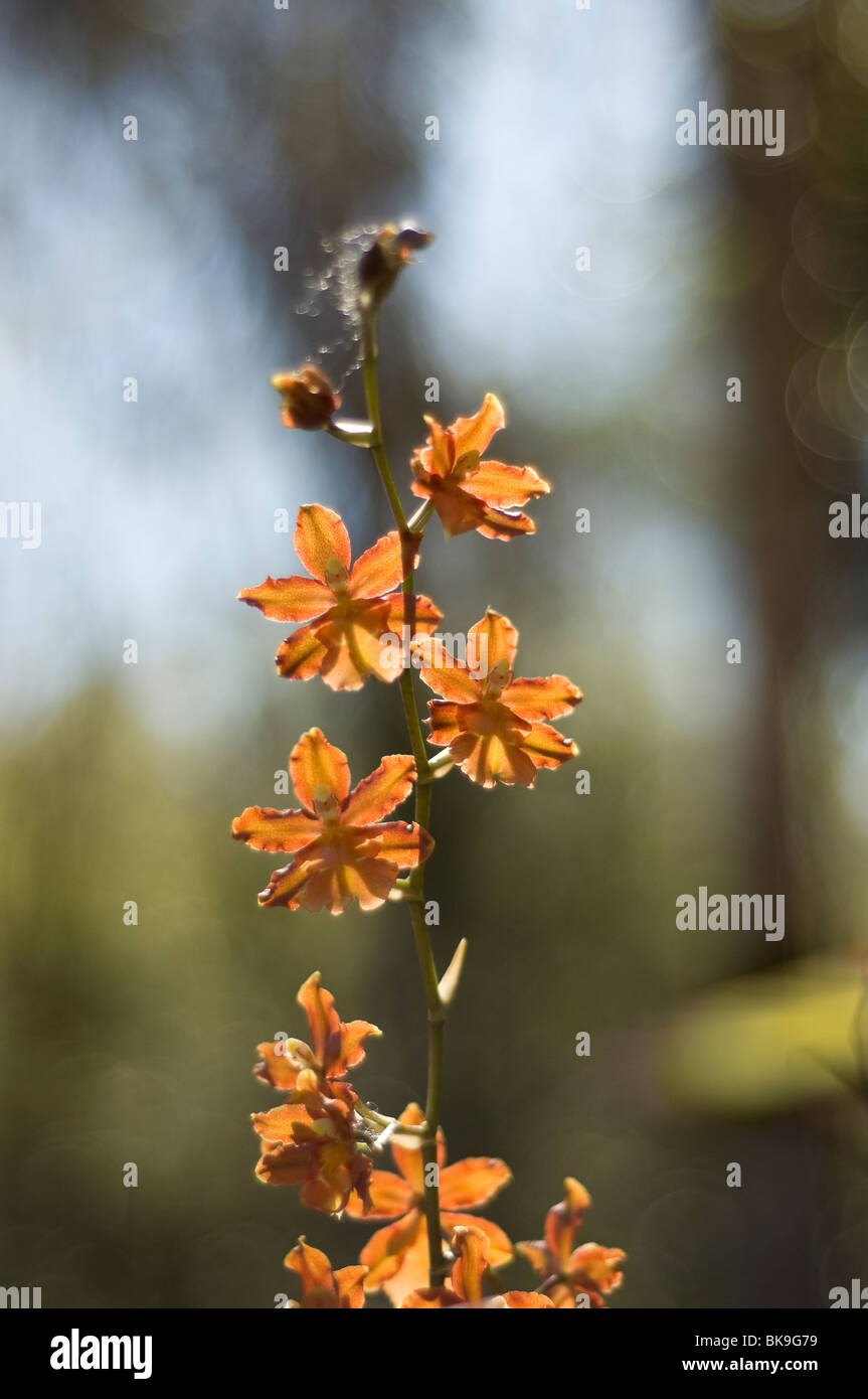 Orchid Garden Florida Stock Photos & Orchid Garden Florida Stock ...