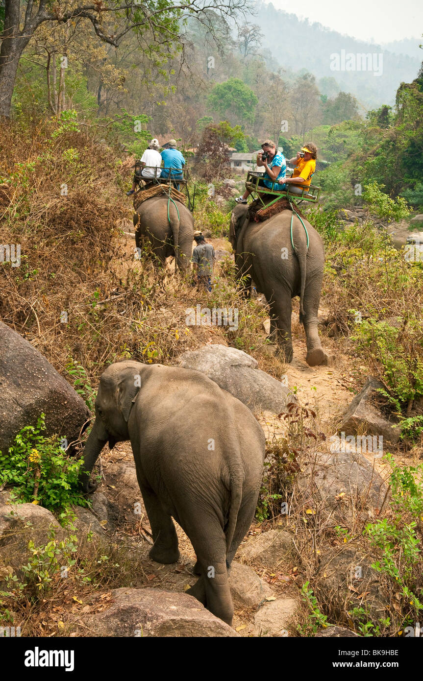 Mae Tang Tours elephant ride in rural Chiang Mai Province, Thailand. - Stock Image