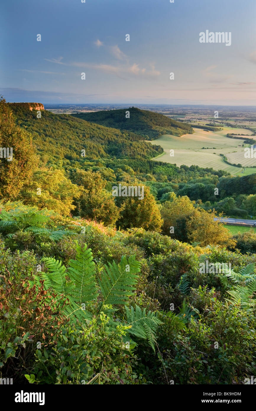 Sutton Bank looking towards Roulston Scar, Hood Hill and over The Vale Of York, North York Moors, Yorkshire, UK - Stock Image