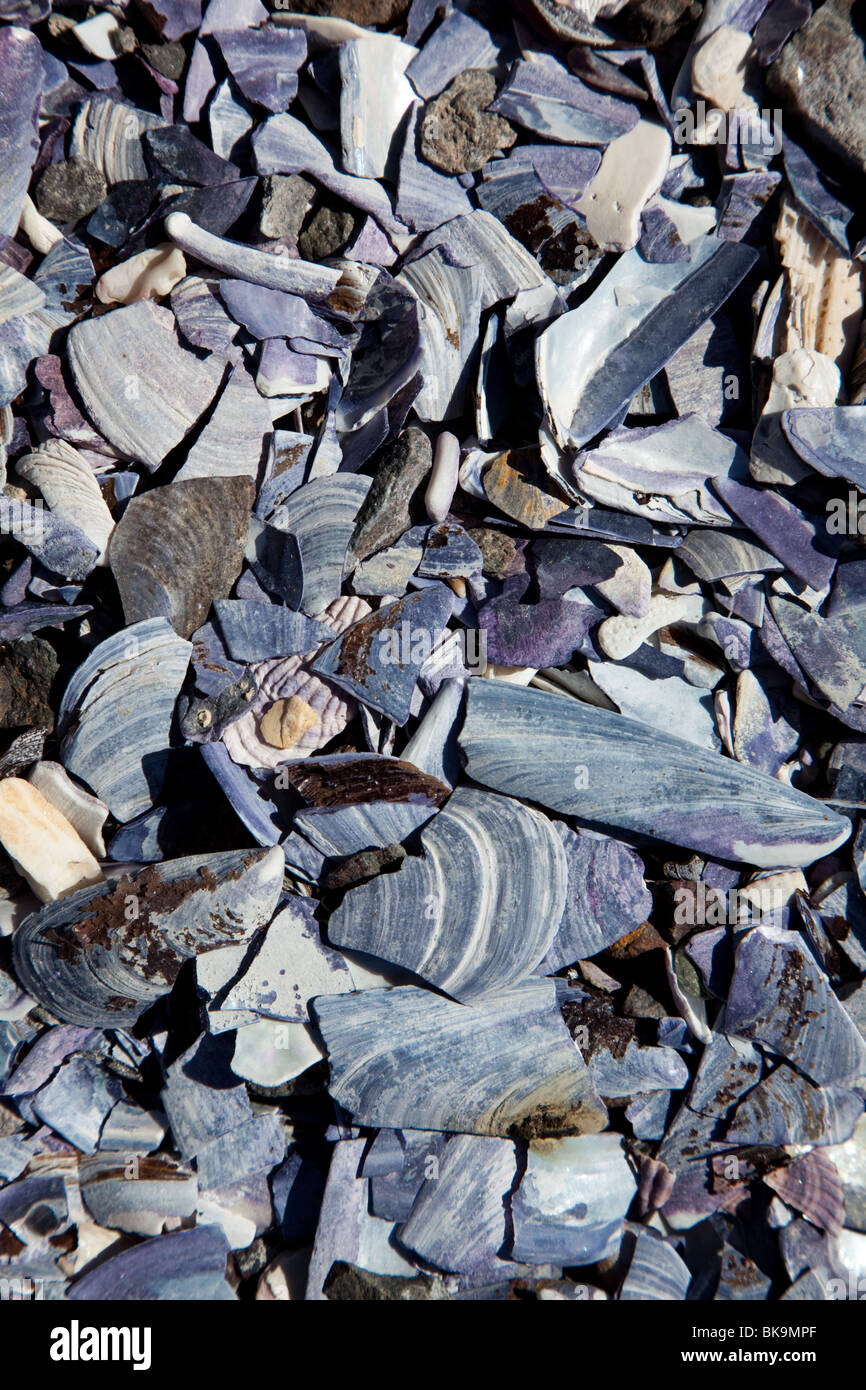 Close-up of small shell pieces on the beach - Stock Image