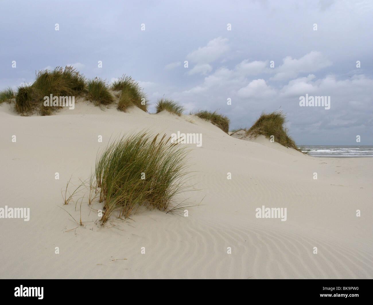 De duinen van Ameland bij naderend slecht weer. Stock Photo