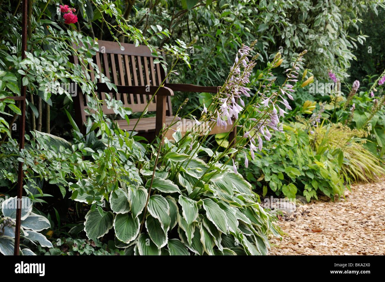 Plantain lilies (Hosta) besides a garden bench. Design: Marianne and Detlef Lüdke - Stock Image