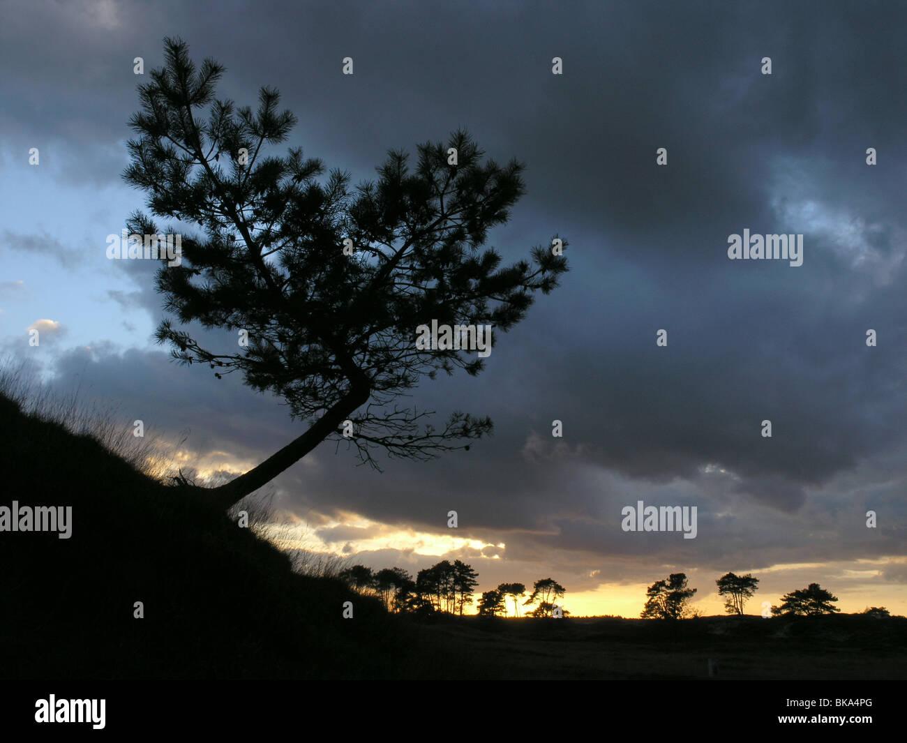 Een kleine Vliegden op duin, tegen de dreigende lucht van een zonsondergang na slecht weer. Stock Photo