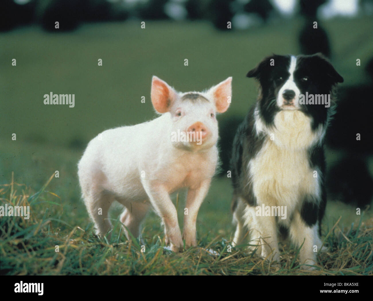 BABE -1995 Stock Photo