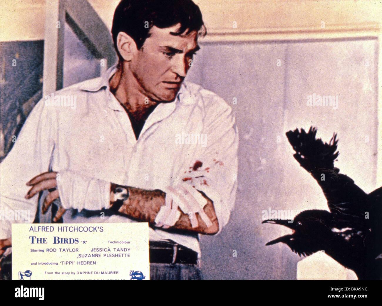 THE BIRDS -1963 ROD TAYLOR - Stock Image