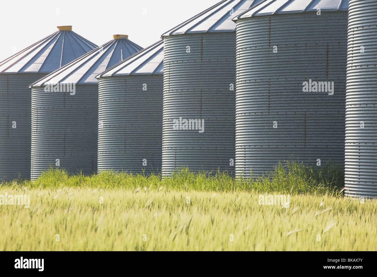 Grain Silos In A Barley Field, West Of Calgary, Alberta, Canada - Stock Image