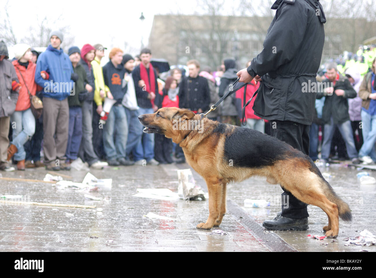 A police dog is used to keep the UAF contained in Bolton during a protest against the EDL. - Stock Image