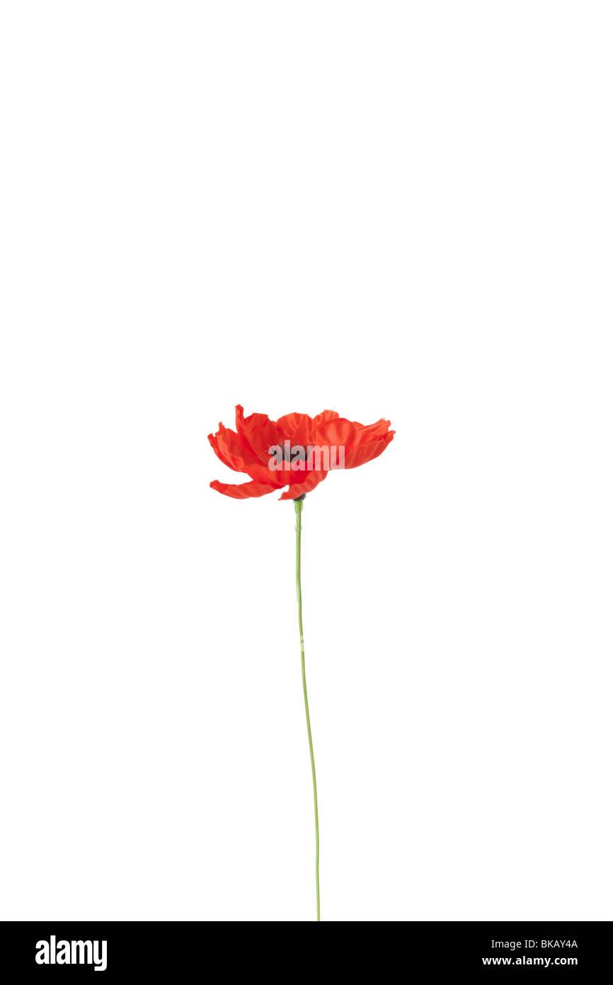 An artificial poppy flower. - Stock Image