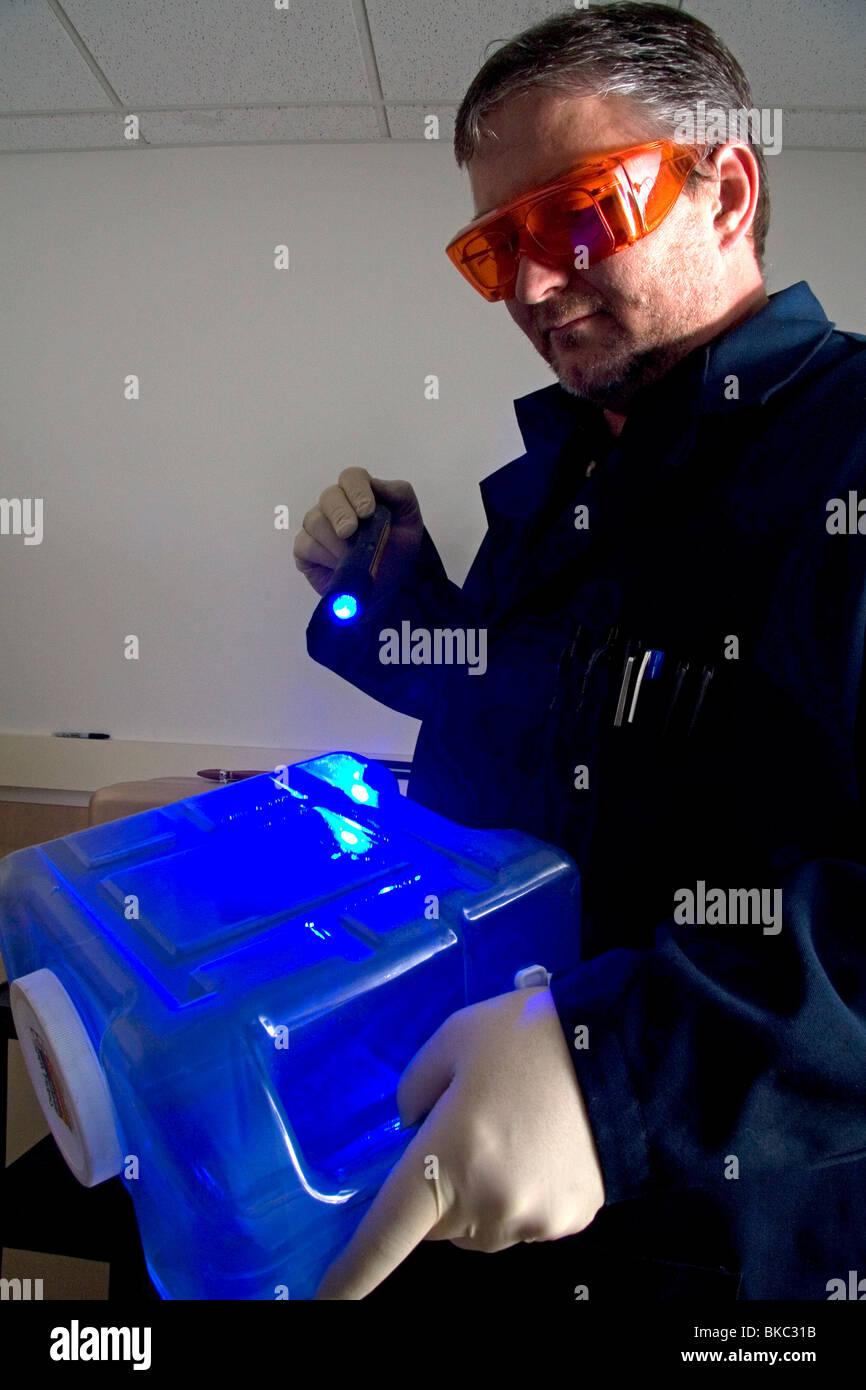 Fingerprint Analyst Using A Colored Light Source To Illuminate Stock Photo Alamy