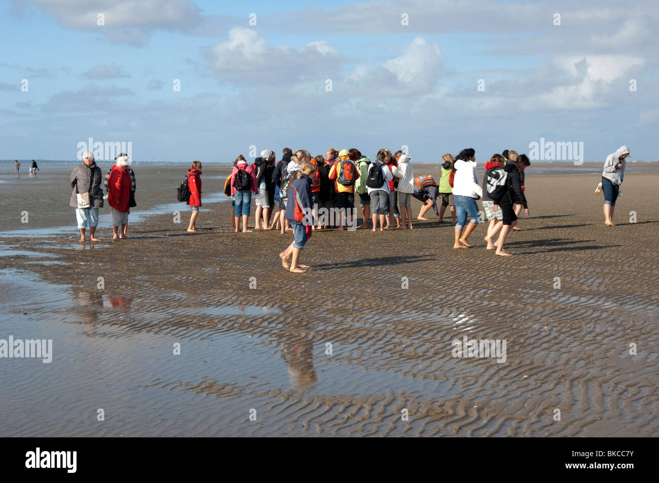 Tourists on mud flats of the Wadden Sea with guide giving biological information. - Stock Image
