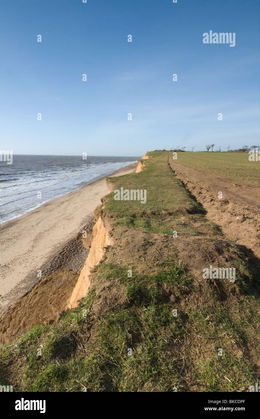 Shot from the Clifftops at Covehithe in Suffolk showing Damage to the Footpaths by Coastal Erosion - Stock Image