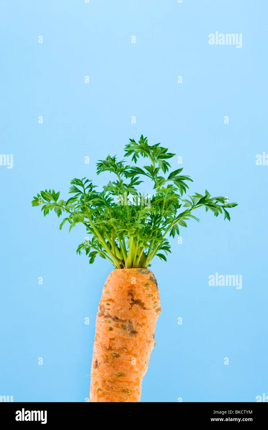 drive out carrot growing fresh green leaf leaves of old make new renewing revive reviving renew regenerate regeneration - Stock Image