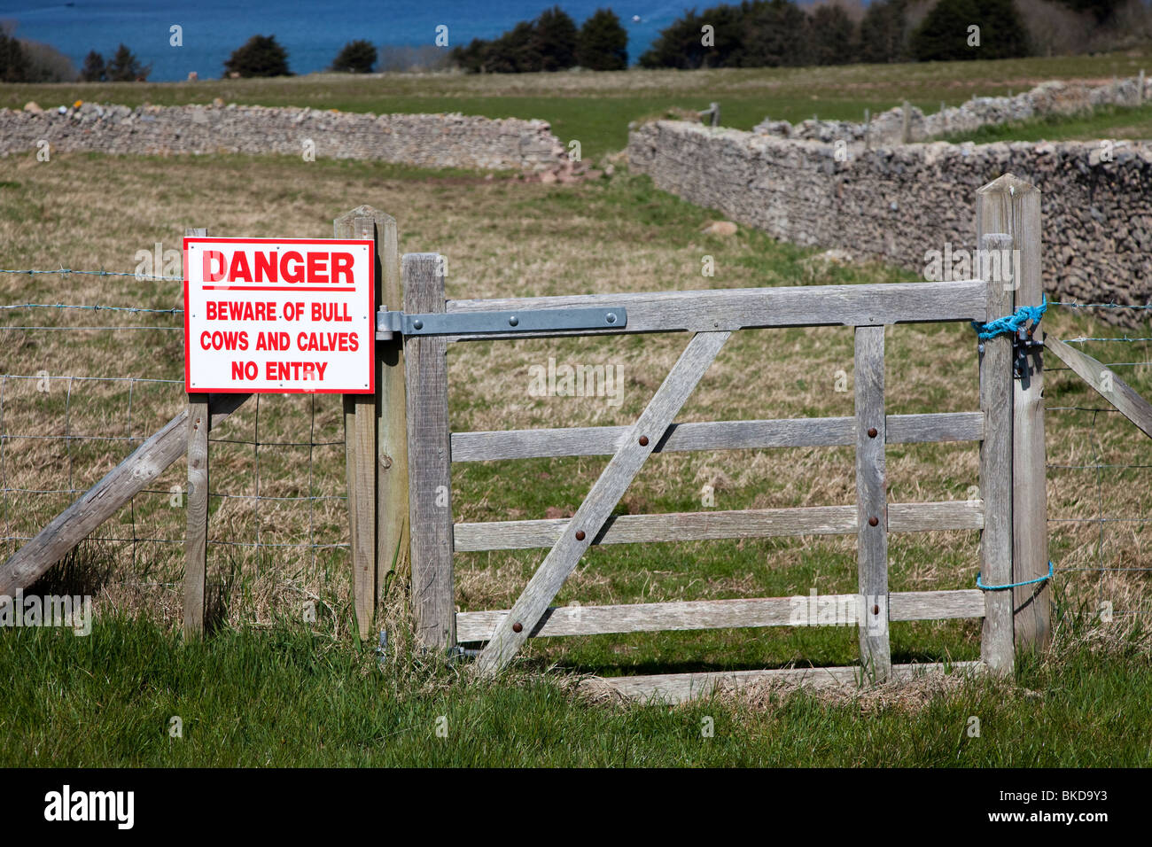 Danger Beware of bull cows and calves no entry sign on gate Caldey Island Wales UK Stock Photo
