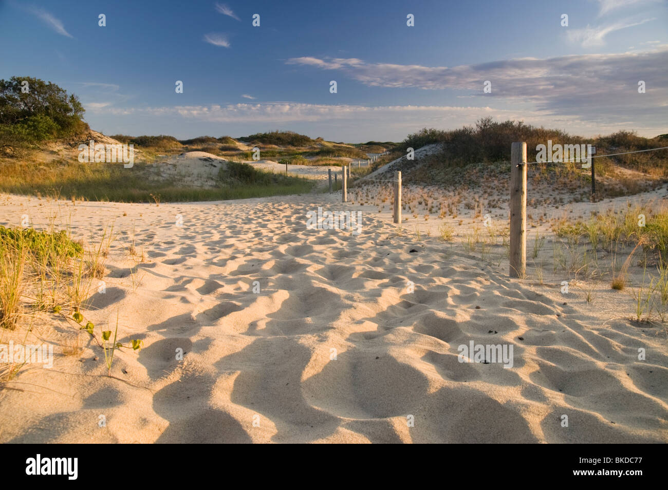 Sand Dunes at Cape Cod National Seashore, Provincetown, Massachusetts - Stock Image