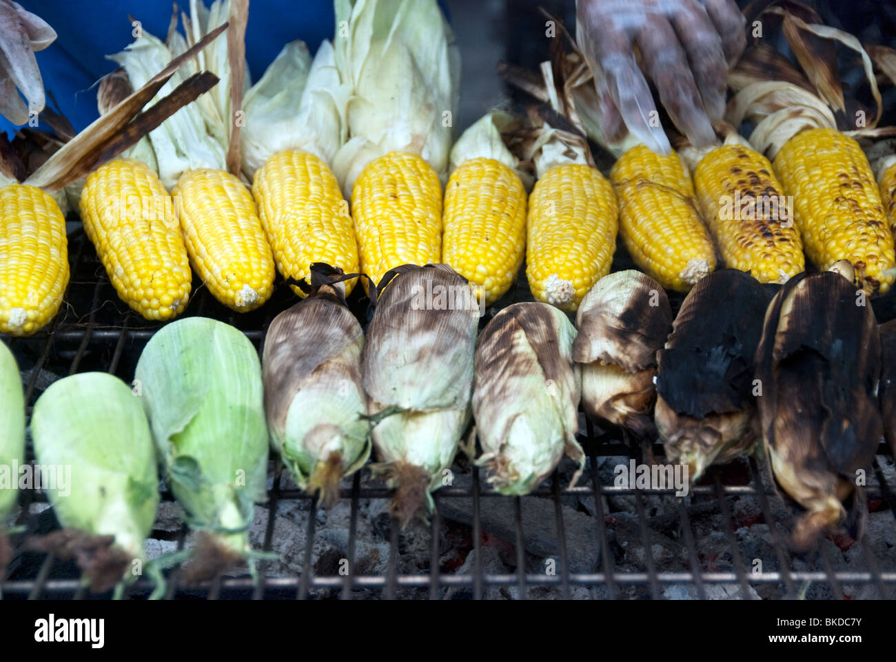 beautiful ears of corn grilling over charcoal fire on Ninth Avenue at New York's 9th Ninth Avenue International - Stock Image