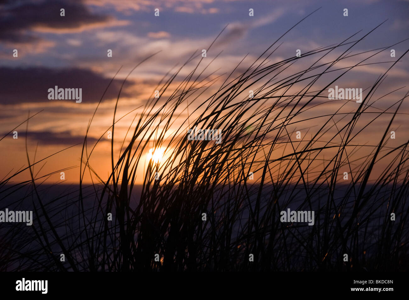 Cape Cod National Seashore, Provincetown, Massachusetts - Stock Image