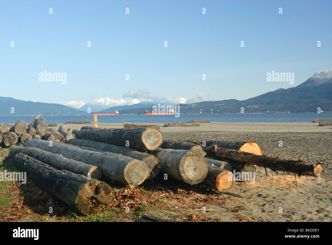 Logs resting on the edge of a deserted beach in Vancouver - Stock Image