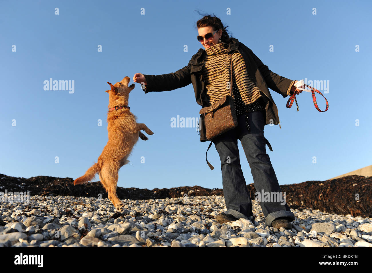 A woman with her Terrier Dog on a stony beach. - Stock Image