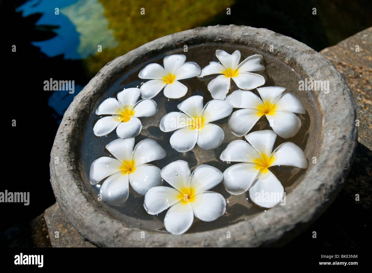 Close up of Spa water feature, Hotel Serendib, Bentota, Sri Lanka - Stock Image