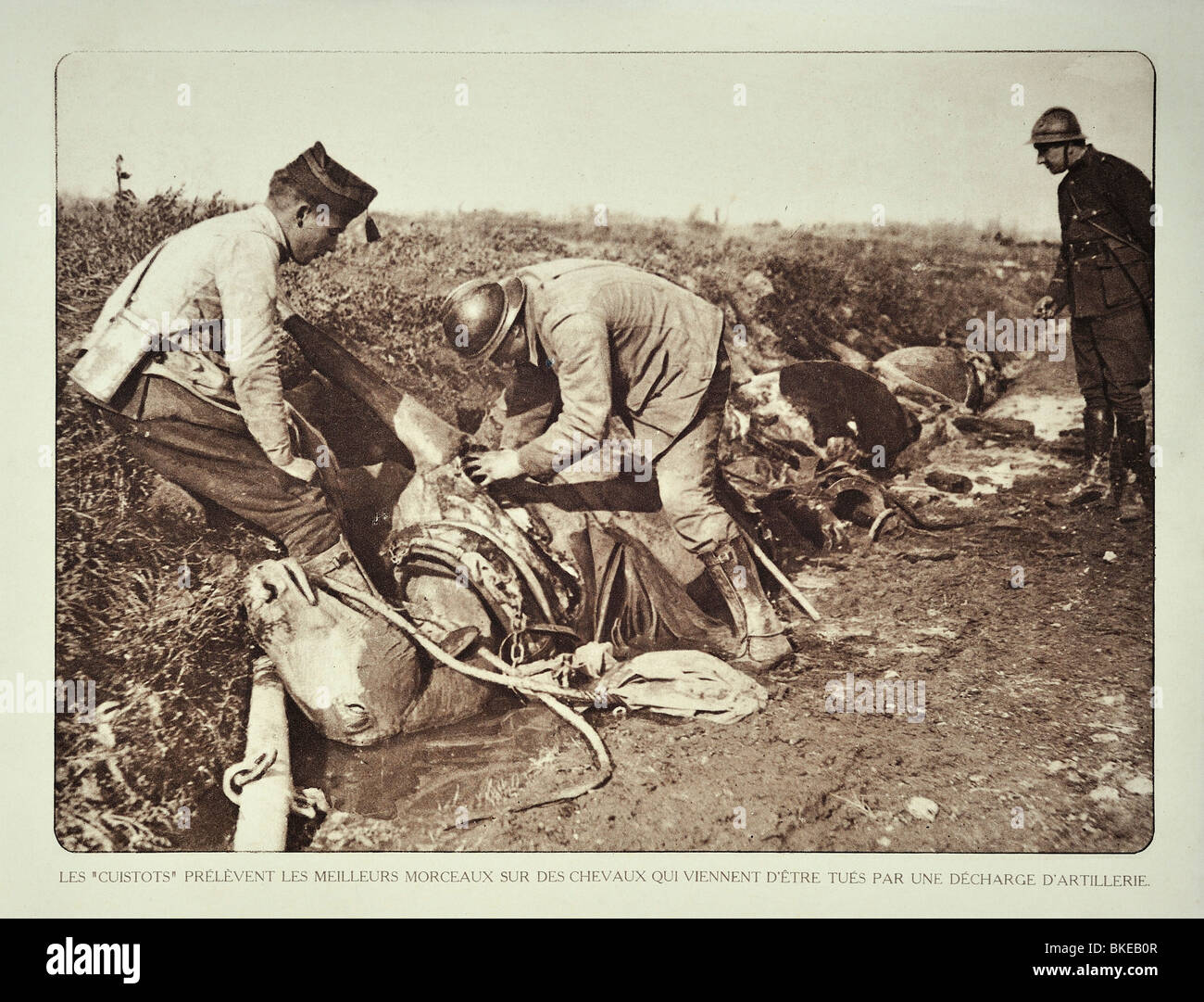 WWI soldiers butchering dead horses for the meat after bombardment in West Flanders during First World War One, - Stock Image