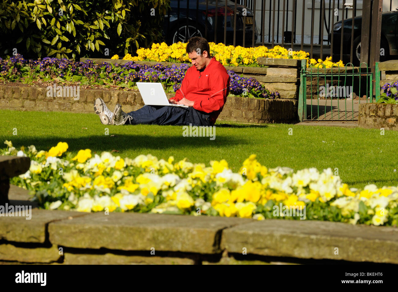 Man working outside on laptop in sunshine with spring flowers, Canonbury Square Islington London England UK - Stock Image