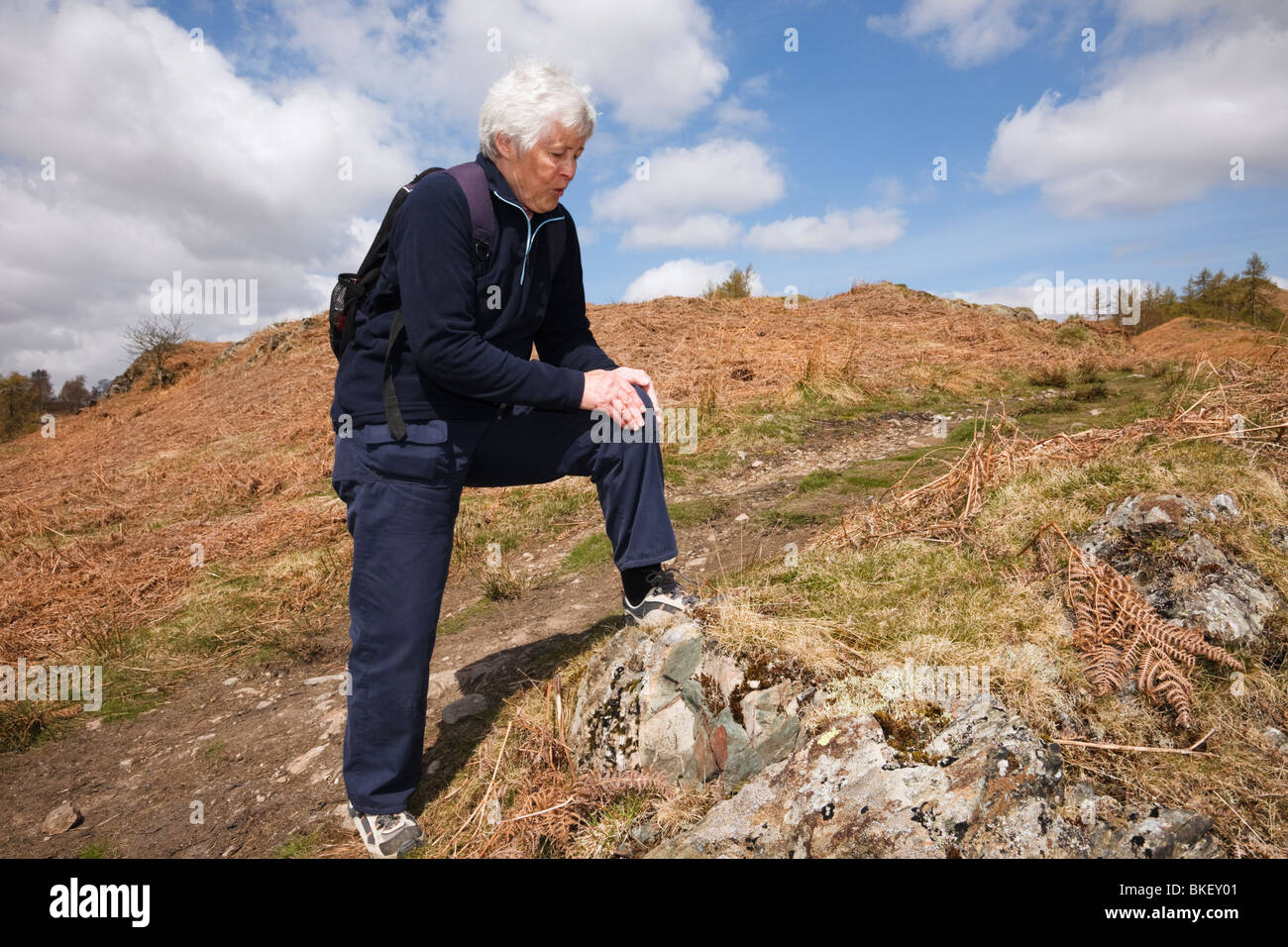 Senior woman walker rubbing a very sore knee after walking exercise. Cumbria, England, UK, Britain. - Stock Image