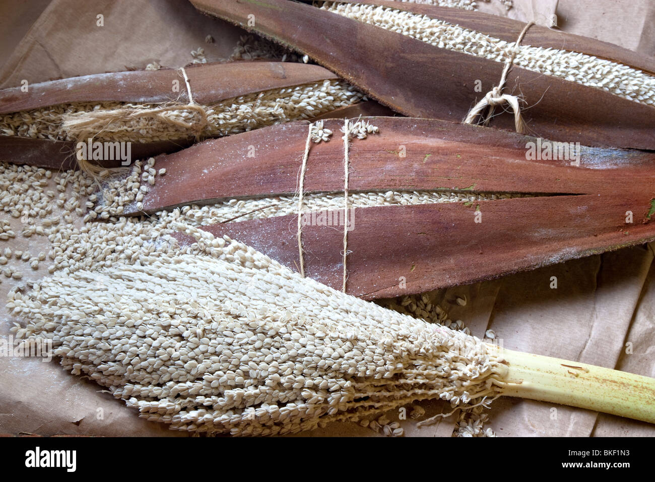 Male pollen pods of Date Palm, drying. - Stock Image