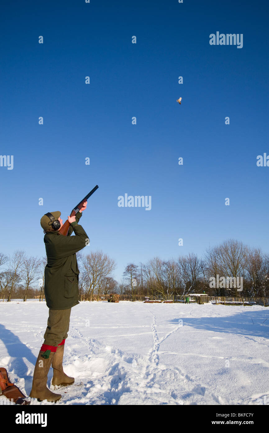 Pheasant Shooting in the snow on a sunny day Stock Photo: 29227743 ...