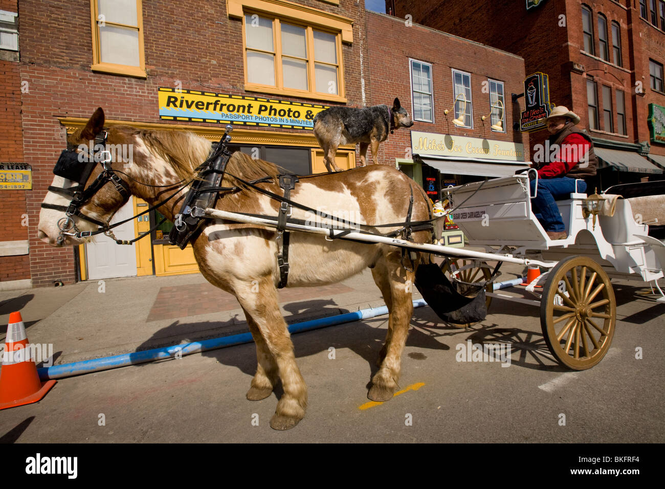 Trained dog on back of carriage horse, Nashville, Tennessee - Stock Image