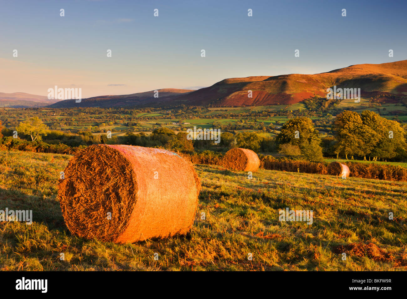 Bracken bales on Mynydd Illtud Common in the Brecon Beacons National Park, Powys, Wales, UK. Autumn (October) 2009 - Stock Image