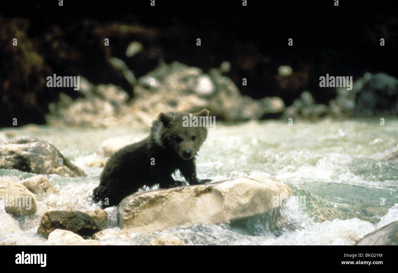 THE BEAR -1989 - Stock Image