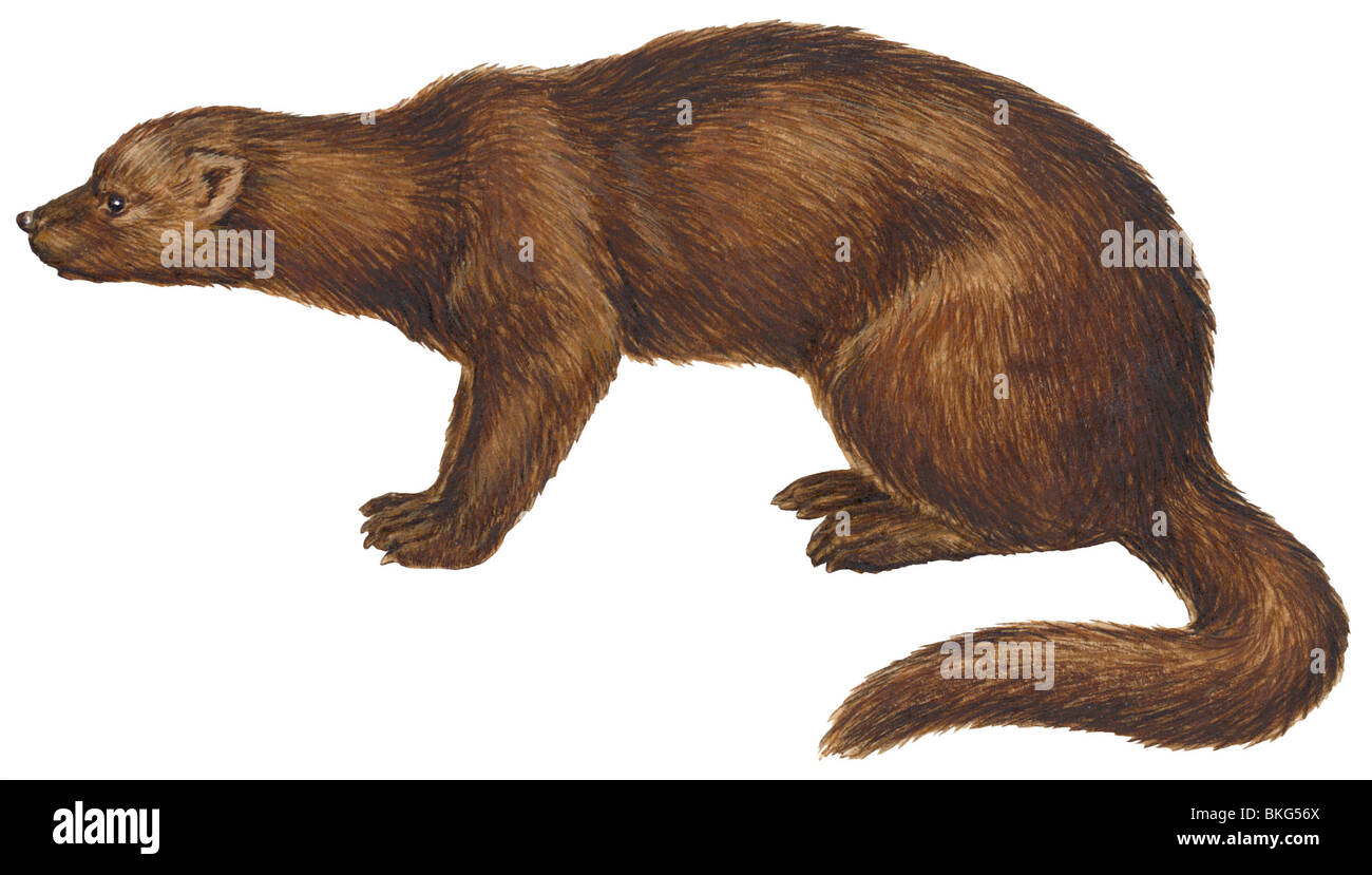 Fisher - Stock Image