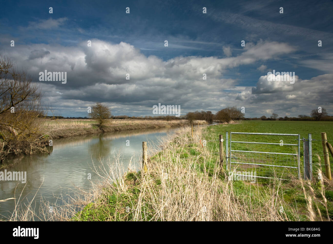 The upper reaches of the River Thames near Castle Eaton in The Cotswolds, Wiltshire, Uk - Stock Image