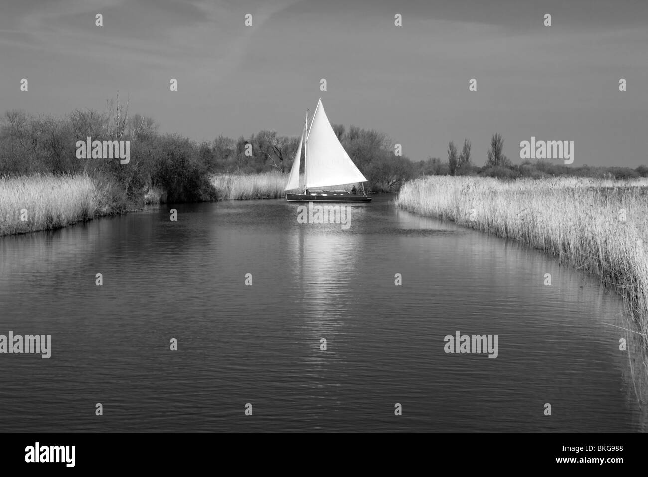 White Sail on the River - Stock Image
