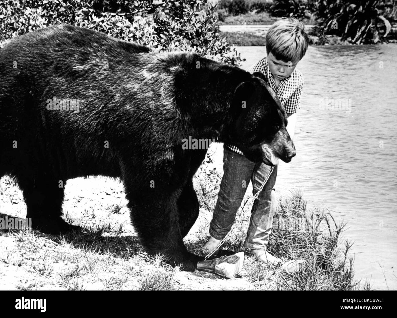 GENTLE BEN (TV) CLINT HOWARD - Stock Image