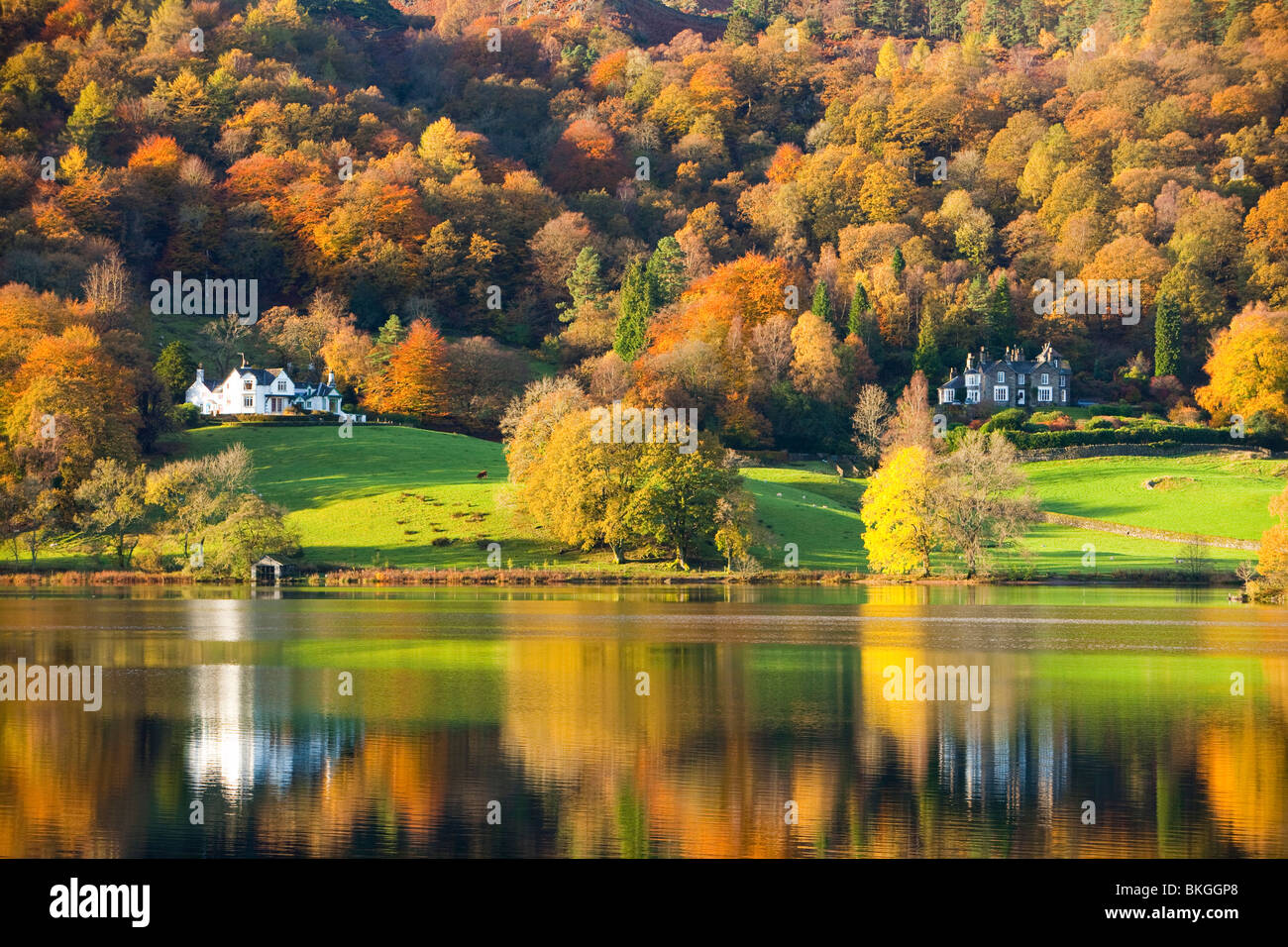 Autumn colours around Grasmere Lake in the Lake District, UK - Stock Image