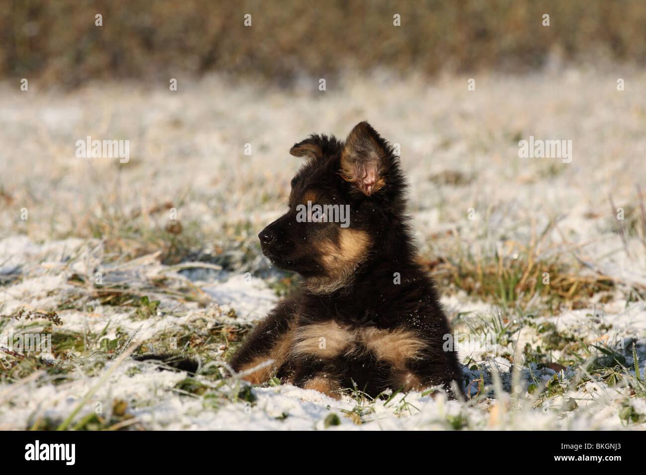 Chodsky Stock Photos & Chodsky Stock Images - Alamy