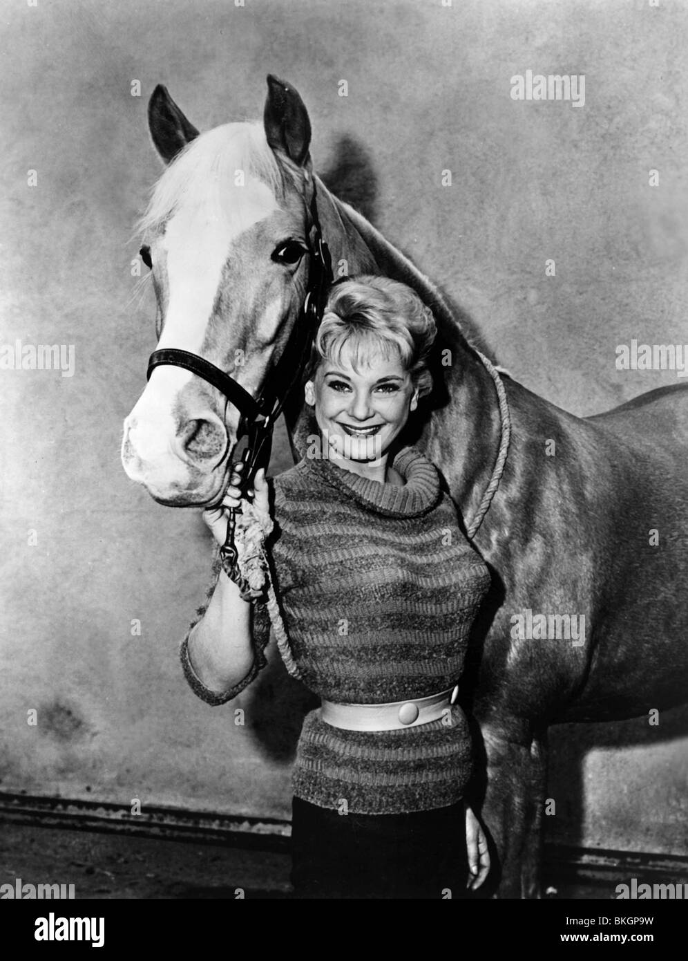 MISTER ED (TV) MR ED (ALT) CONNIE HINES MED 007P - Stock Image